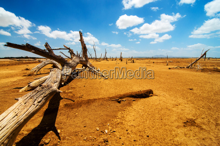 a fallen tree in a desert