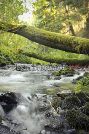 naturschutzgebiet furbachtal bach