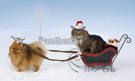 weihnachten, für, max, &, jolie - 7777061