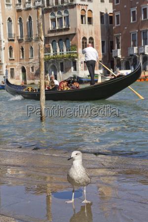 canal grande mit gondel venedig italien