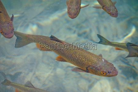 tier fauna fisch unterwasser forelle unterwasser