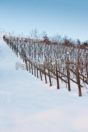 toskana wineyard im winter
