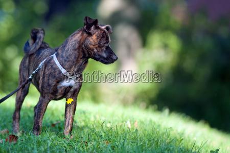 animals dog mixed breed
