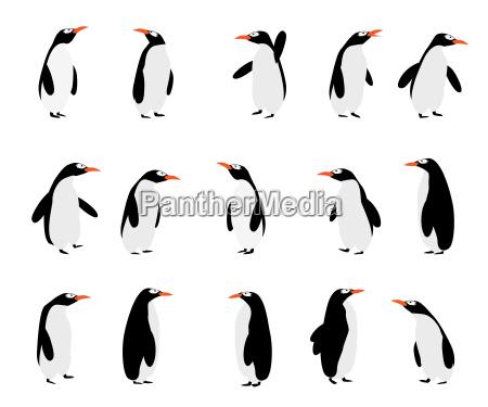 pinguine hintergrund