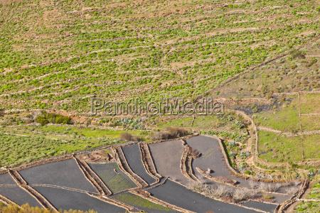landscape lanzarote terrace cultivation near haria