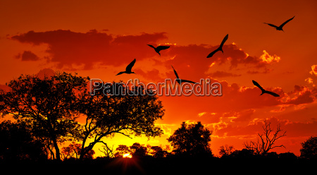 landschaft afrikas mit warmen sonnenuntergang