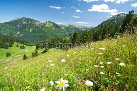 alpine meadow in germany