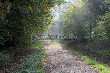 a forest trail in the fall