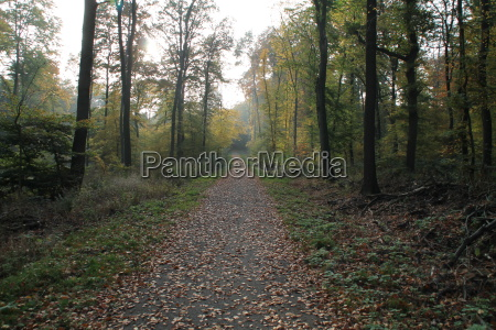 a forest trail in autumn