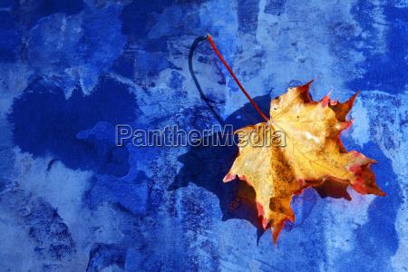 digiart the autumn leaf