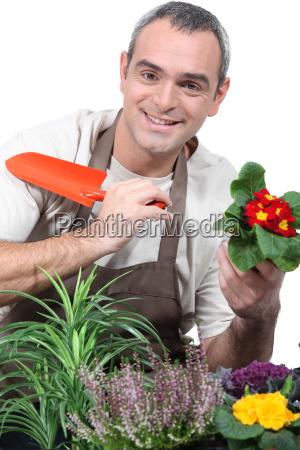 maennliche gaertner topfpflanzen