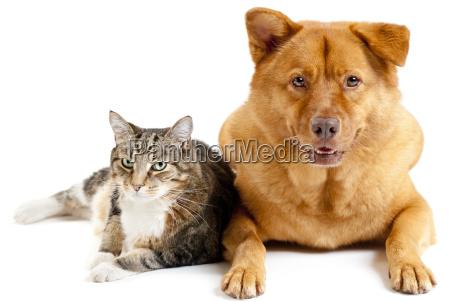 katze und hund zusammen