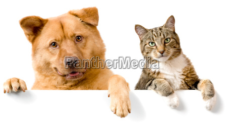 hund und katze ueber weisser fahne