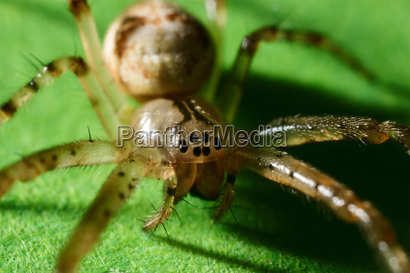 kleine spinne nahaufnahme