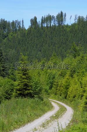 black forest nature park