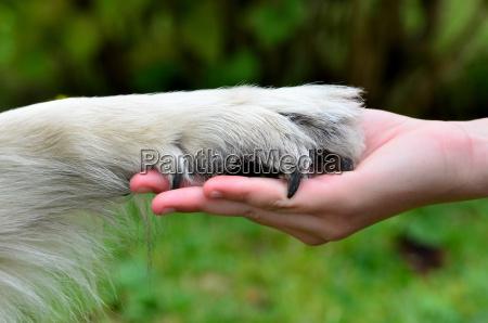 hunde hand pfote