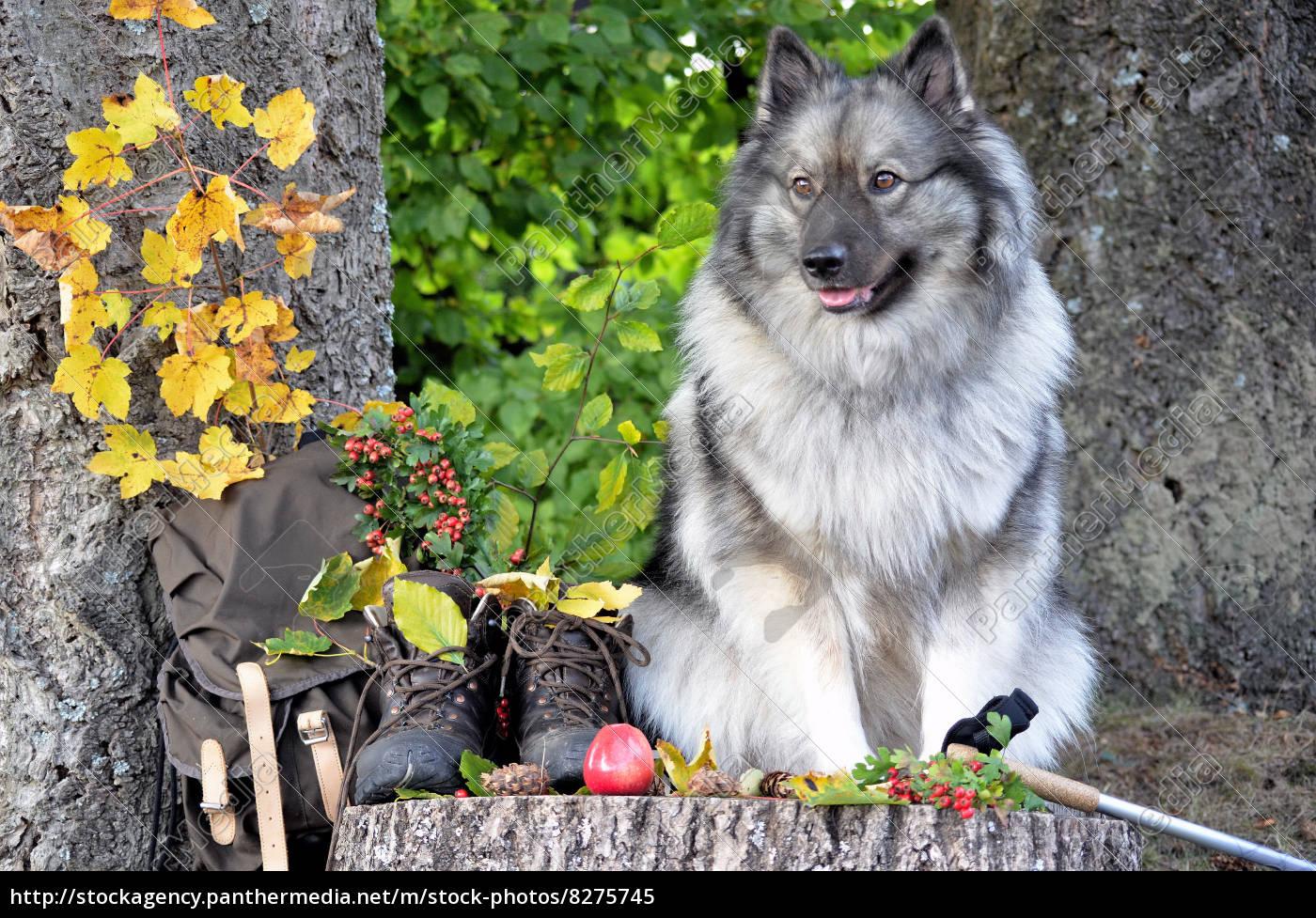 Lizenzfreies Bild 8275745 Hund Herbst Pause Wandern