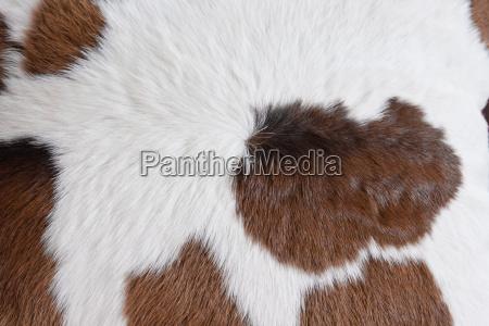pelz deko dekorativ gewebe tierhaut balg