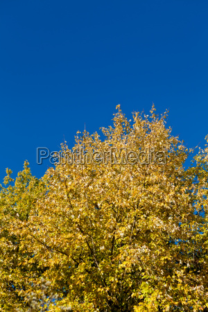 beautiful blue sky with tree in
