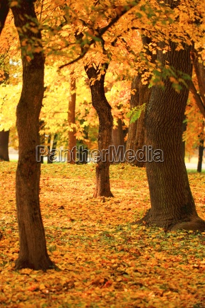 branch of an autumn tree in