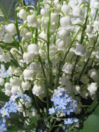 blumenstrauss aus maigloeckchen und blauen blumen