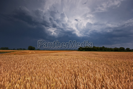 kornfeld and storms grainfield and