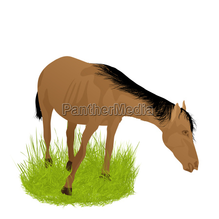 horse in the grass