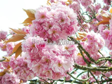 baum blume blumen pflanze blueten fruehjahr