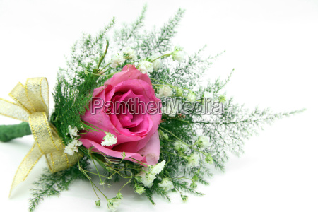 blume pflanze rose flora dekor party