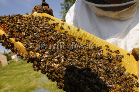 honeycomb honeycomb bee beekeeping bee bees
