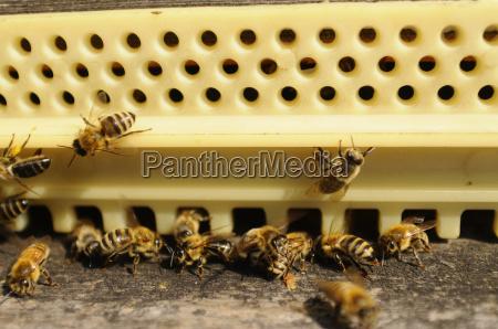 hive beekeeping beekeeping bee bees animals