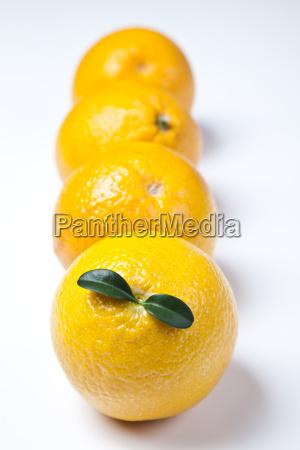 stilleben der orange
