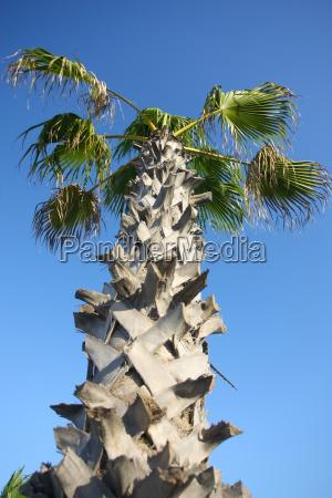die palme ist sehr einfach