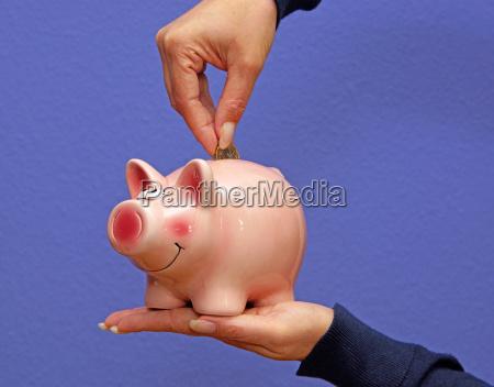 piggy bank savings pig
