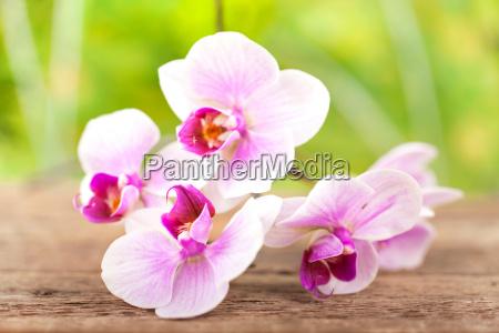 orchidee mit natuerlichen hintergrund