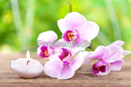 orchideenblueten mit kerze