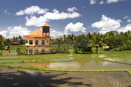 touristvilla in the rice fields