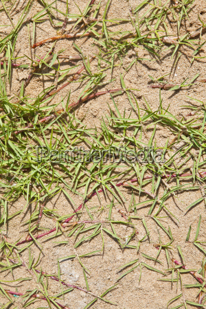 any orientation grass on beach sand