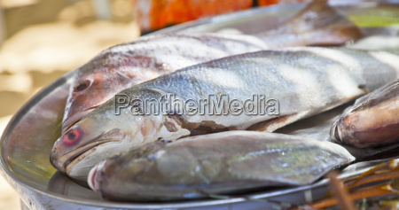 selection of fresh fish on silver