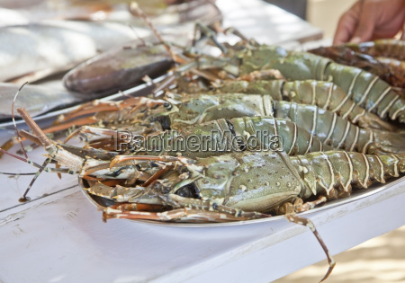masive king prawns fresh fish counter