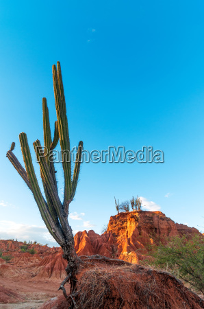 cactus in a red desert valley
