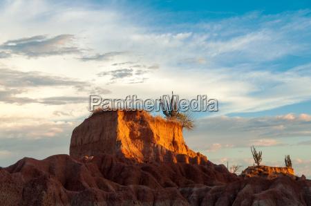 closeup view of desert mesa