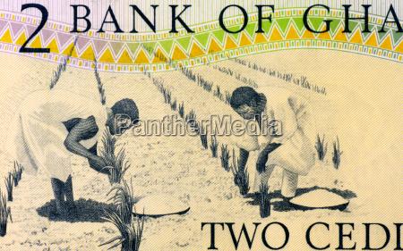 menschen leute personen mensch landwirtschaft afrikanerin