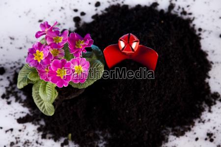 gartenkonzept pflanze