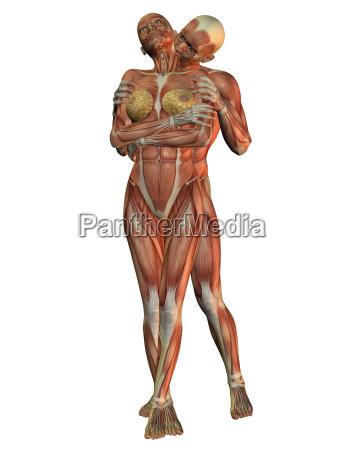 menschliche anatomie bei einer umarmung