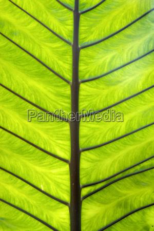 garten vorlage handflaeche gestreifte schnittmuster streifte