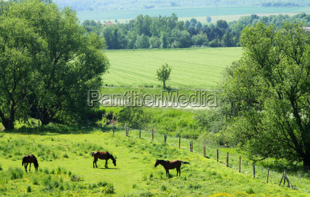 horses in innerstetal near hildesheim