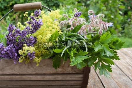 spice garden reap mint lavender gardens
