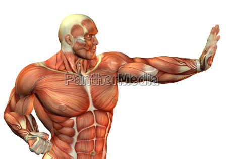 muskelaufbau body builder in kampf pose