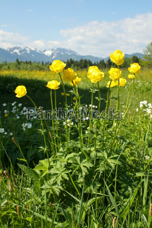 alps conservation of nature spring alpine